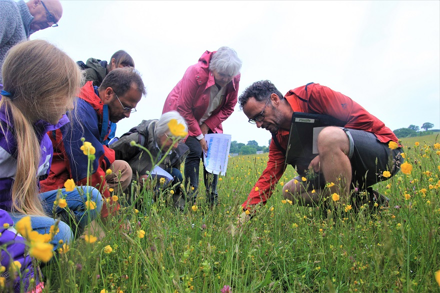 Meadow flower walk with the Snowdonia Society
