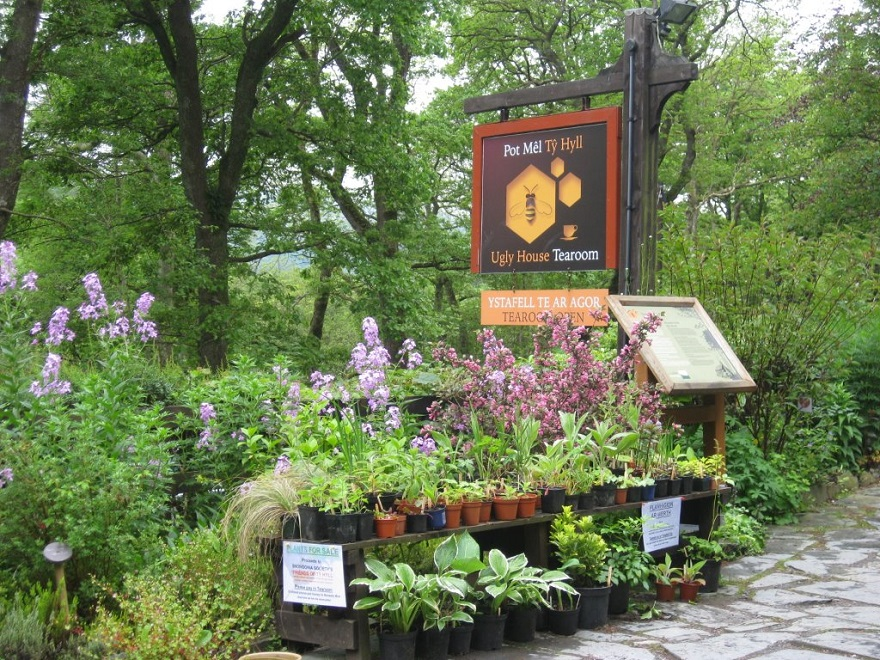 Snowdonia plant sale at the Honey Pot tearoom, Tŷ Hyll